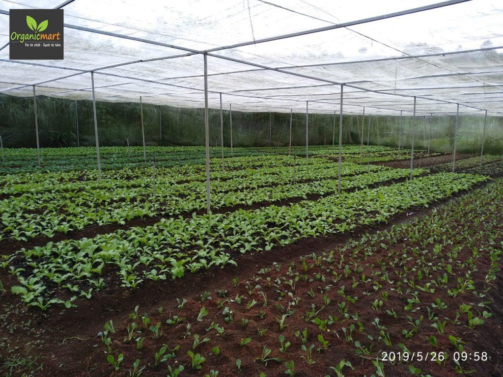 organic_green